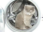 Барабан стиральной машины Electrolux
